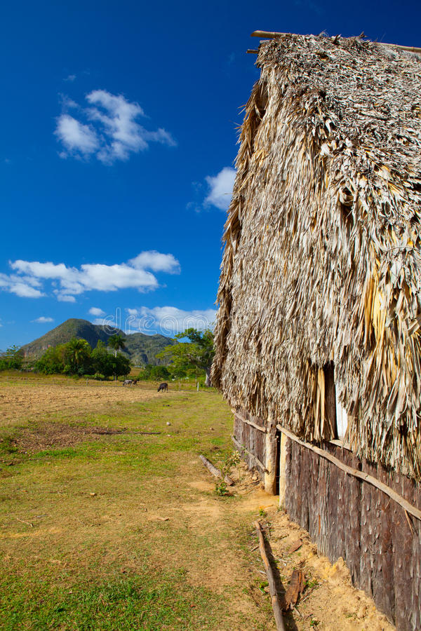 Typowa stajnia na tabacznych plantacjach zdjęcia royalty free