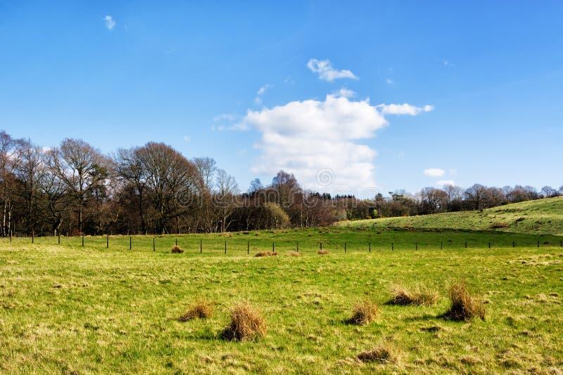 Typowa Szkocka wieś w wiośnie, polu i lasach, zdjęcie stock
