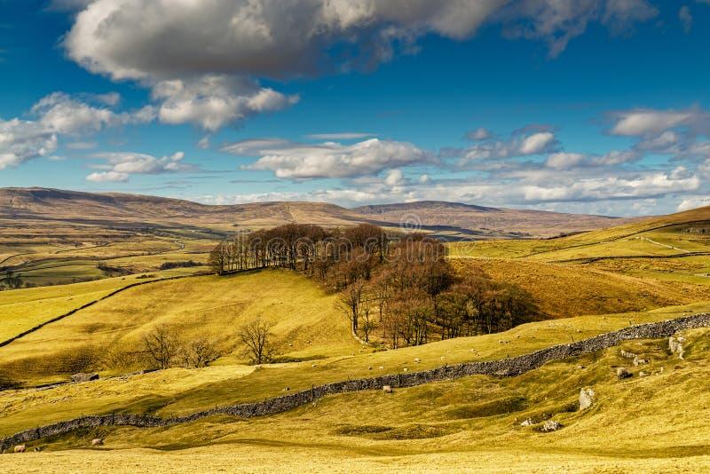 Typowa Yorkshire dolin sceneria z tocznymi wzgórzami i ziemią uprawną obraz stock
