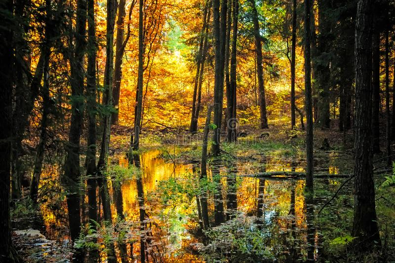 Typowa Złota jesieni scena zdjęcia stock