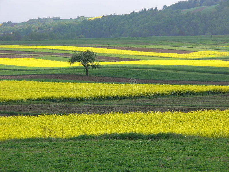 typowe krajobrazu Poland zdjęcie royalty free