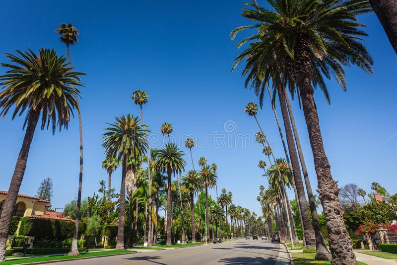 Typowe palmy wzdłuż ulicy w Beverly Hills zdjęcie royalty free