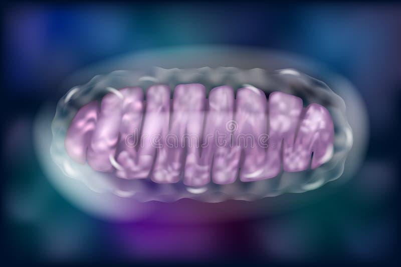 Typowi Mitochondria royalty ilustracja