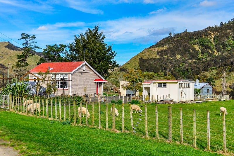 Typowy gospodarstwo rolne w Whanganui parku narodowym, Nowa Zelandia obrazy royalty free