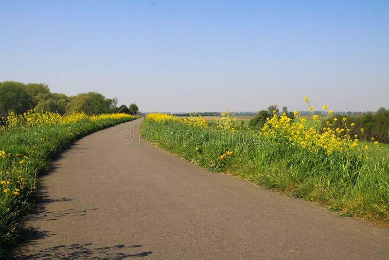 Typowy holender brukujący wiejski kolarstwo ślad z zieloną trawą, żółtymi dandelions i rapeseed okwitnięciami na obich stronach - obraz royalty free