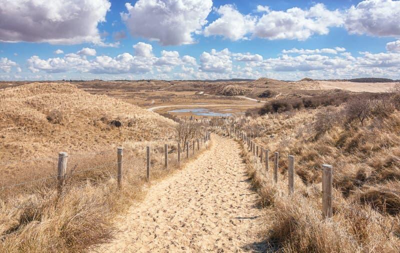 Typowy Holenderski diuna krajobraz który jest częścią Zuid Kennemerla obraz royalty free