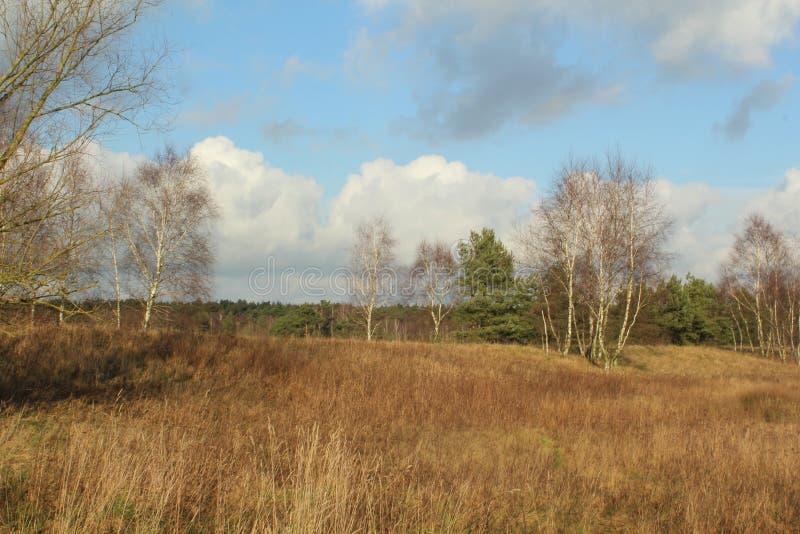 Typowy krajobraz w północnym Germany zdjęcia royalty free