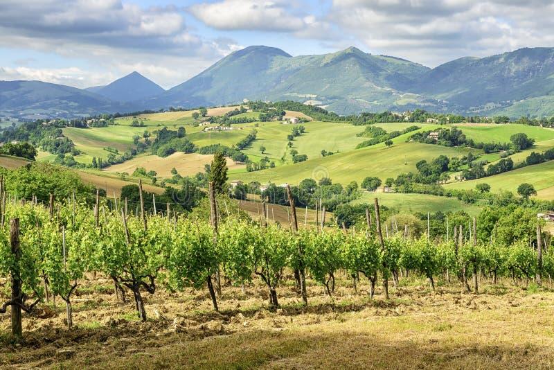 Typowy krajobrazowy Marche Włochy obraz royalty free
