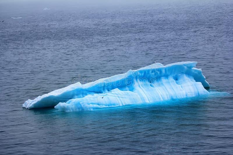 Typowy mruk wewnątrz nawadnia Barents morze (mała płaska góra lodowa) zdjęcie stock