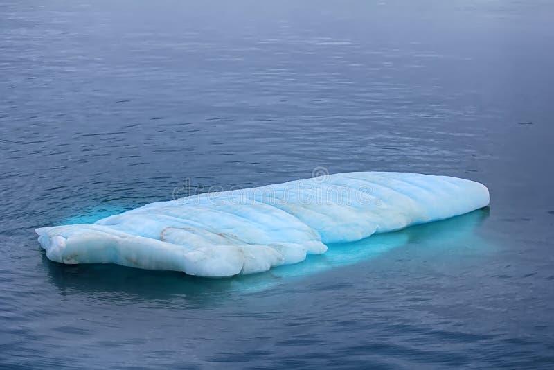 Typowy mruk wewnątrz nawadnia Barents se (mała płaska góra lodowa) fotografia stock