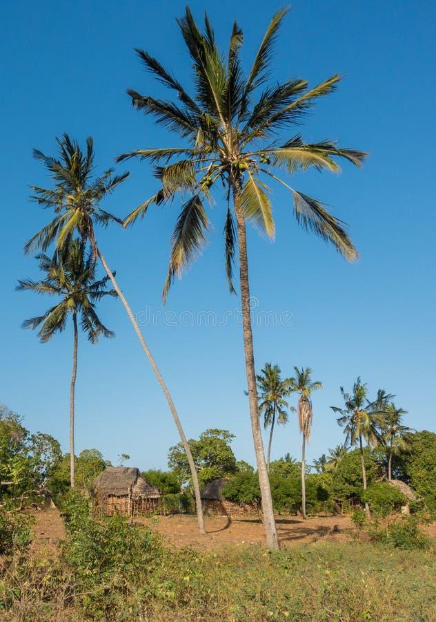 Typowy rolnika dom z drzewkami palmowymi w Kenja obrazy royalty free