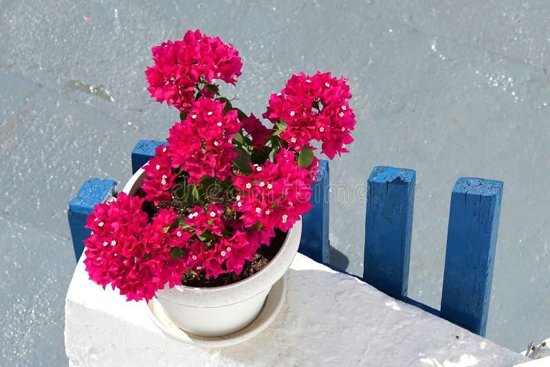 Typowy wizerunek Cyclades wyspy, czerwoni bodziszki na tle, białym i błękitnym fotografia royalty free
