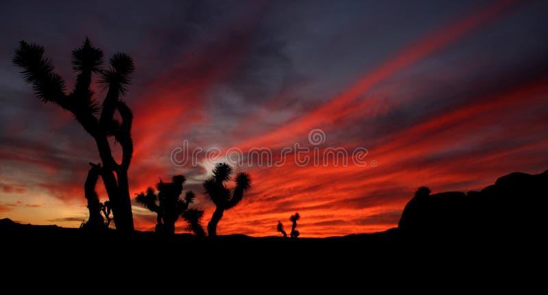 Niebo ogień przy Joshua drzewa park narodowy obraz stock