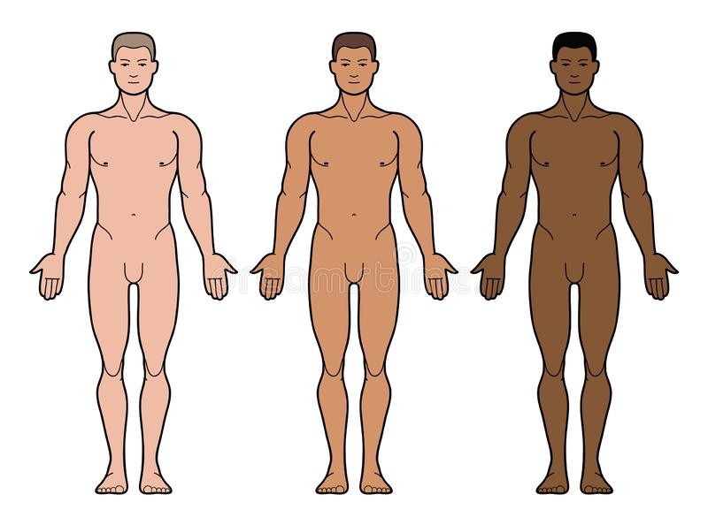 3 typu mężczyzna skóry brzmienie royalty ilustracja