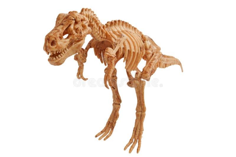 tyrannosaur стоковые фотографии rf