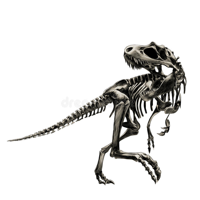 Tyrannosaure de squelette de dinosaure illustration stock