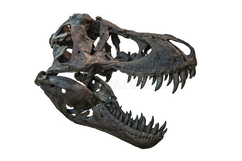 Tyrannosaure Rex Skull illustration de vecteur