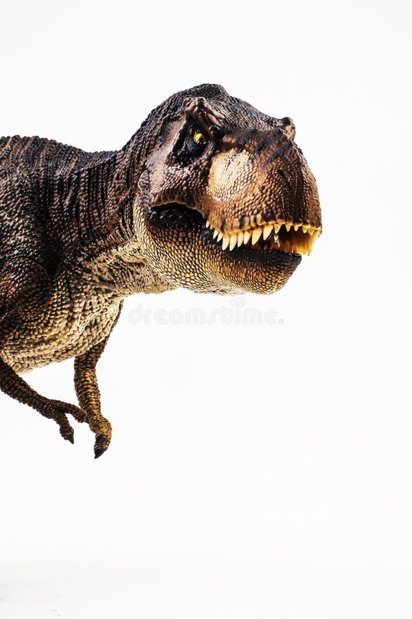 Tyrannosaure T-rex, dinosaure sur le fond blanc image stock