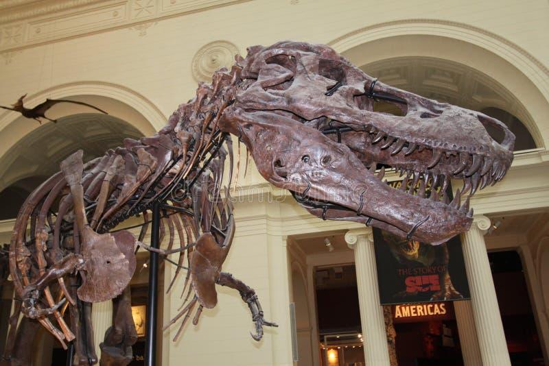 tyrannosaurus zdjęcia royalty free
