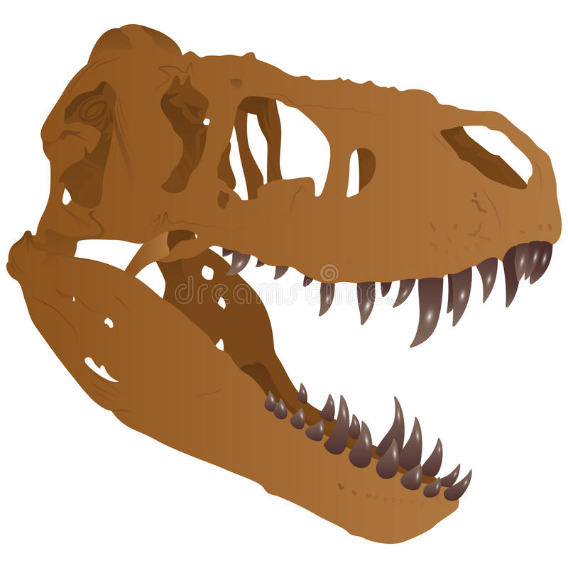 Tyrannosaurus czaszka ilustracja wektor