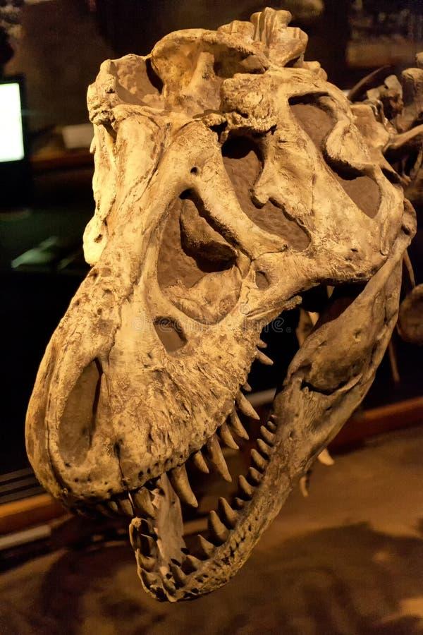 Tyrannosaurus Rex stock foto
