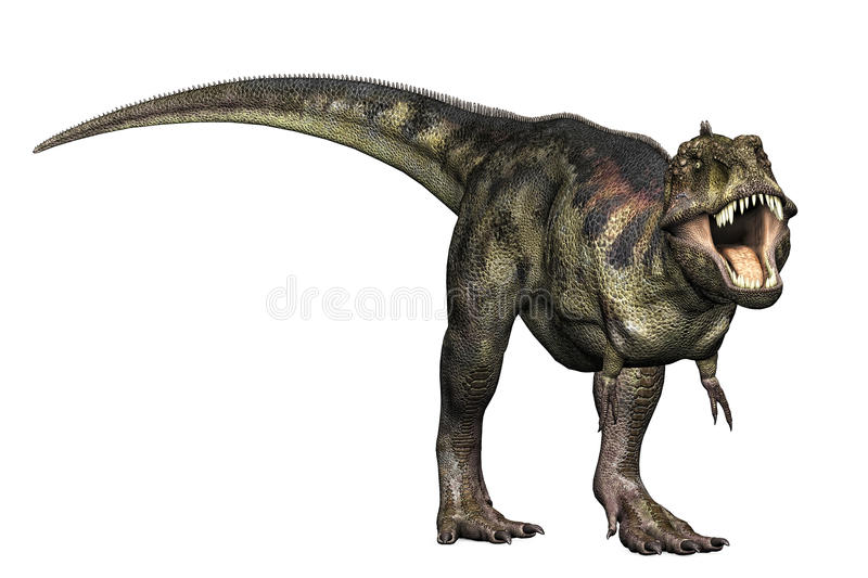 Tyrannosaurus Rex Defending. Tyrannosaurus Rex full body illustration head down mouth open teeth showing in a defending aggressive roar stance. Isolated clip art vector illustration