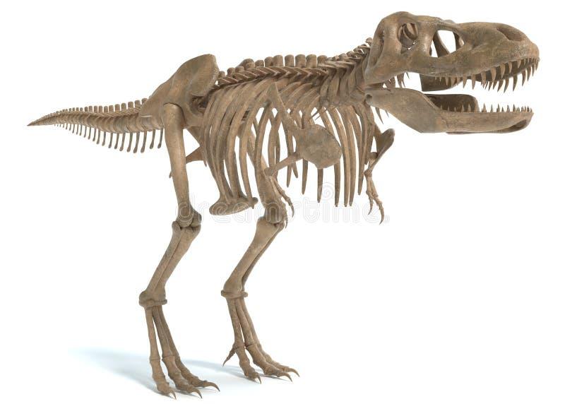 Tyrannosaurus rex kościec ilustracja wektor