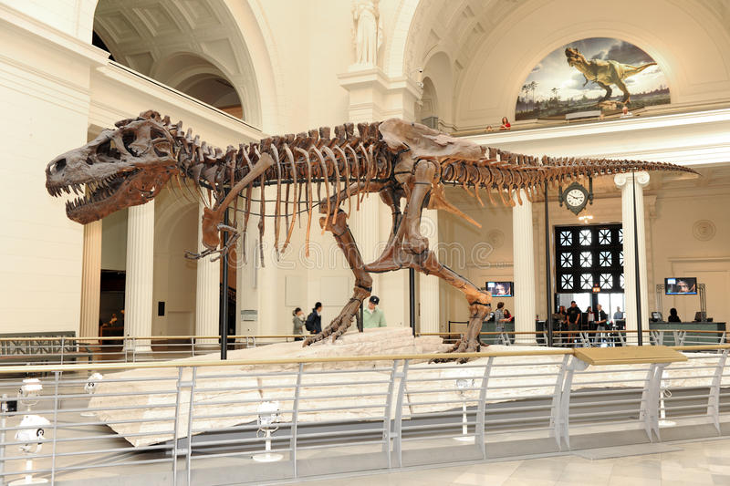 Tyrannosaurus Rex Sue at Field Museum in Chicago royalty free stock images