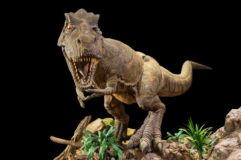 Tyrannosaurus rex . T-rex is walking , growling and open mouth on rock . Black isolated background . Embedded clipping paths stock photography