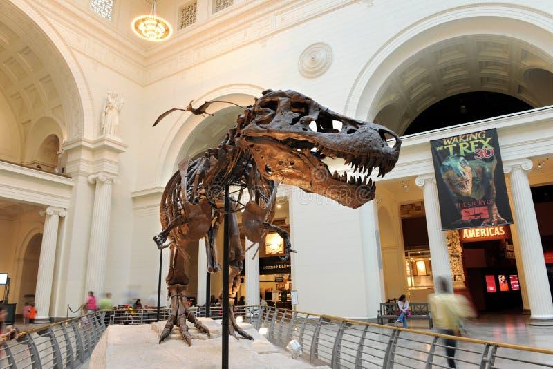 Tyrannosaurus Rex Zaskarża przy Śródpolnym Muzeum w Chicago zdjęcie stock