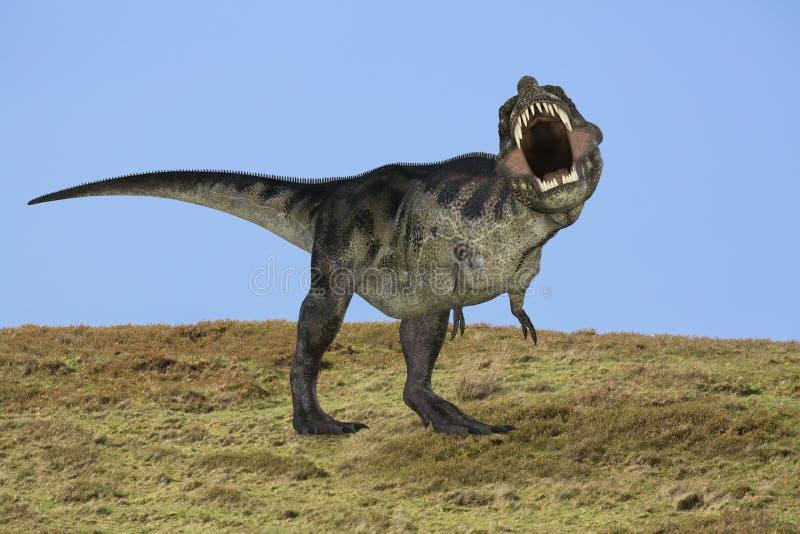 TyrannosaurusRex dinosaur royaltyfria bilder