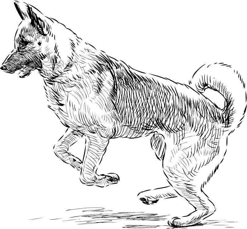 Tysk herde i ett hopp royaltyfri illustrationer
