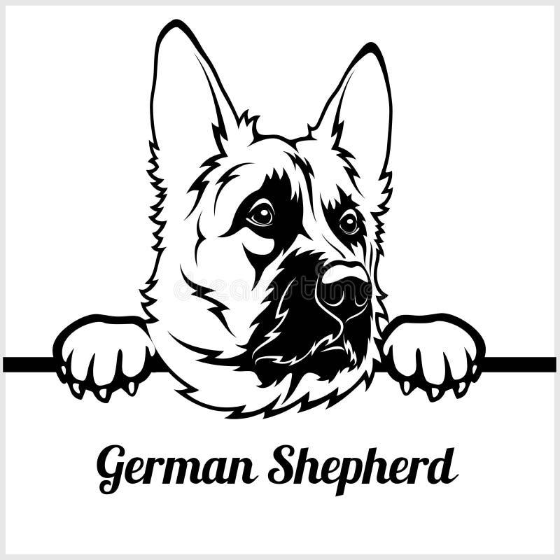 Tysk herde - kika hundkapplöpning - - avelframsidahuvud som isoleras på vit stock illustrationer