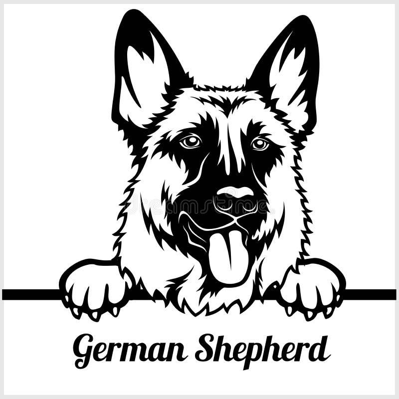 Tysk herde - kika hundkapplöpning - - avelframsidahuvud som isoleras på vit royaltyfri illustrationer