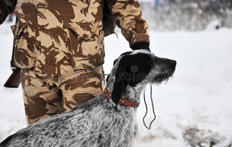 tysk jakt för hund arkivbilder