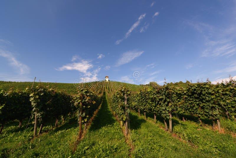 Tysk vingård arkivfoton