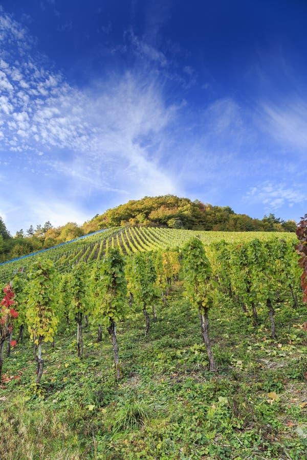 Tysk vingårdplats 2 arkivfoton