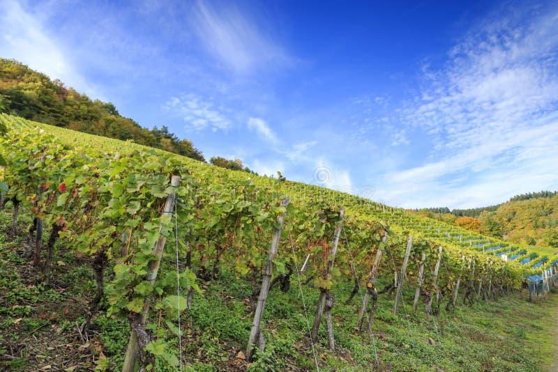 Tysk vingårdplats fotografering för bildbyråer