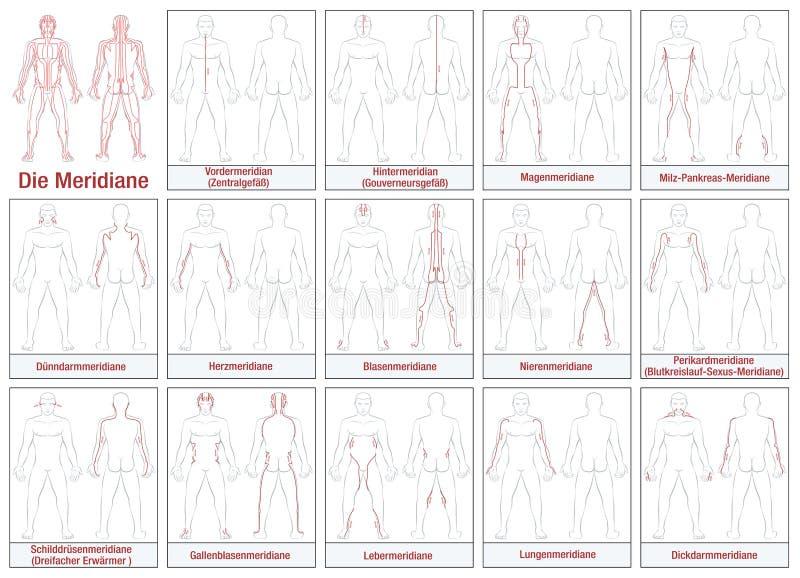 TYSKA kroppmeridianer vektor illustrationer