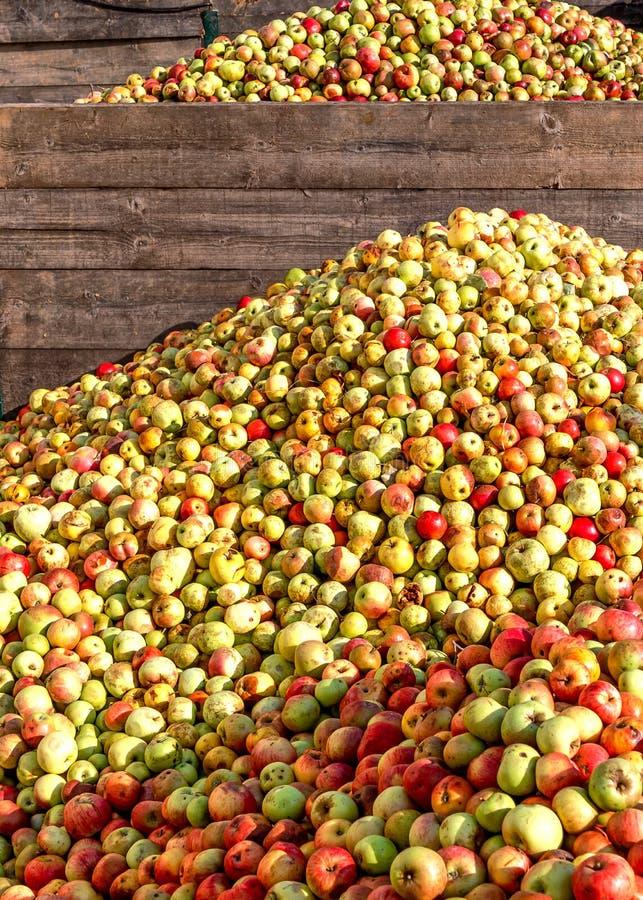 Tyskland-berg av äpplen i en hessiansäppeljuicevinodling arkivbilder