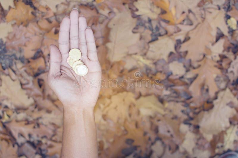 Tysklandmynt i manhand med nedgången lämnar bakgrund, Deutsche det guld- myntet, royaltyfria bilder