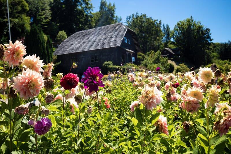 Tyskt hus med blommor i Frutillar i Chile arkivfoton