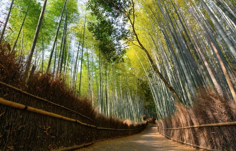 Tyst bana i den Arashiyama bambudungen i Kyoto, Japan fotografering för bildbyråer