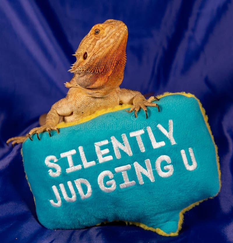 Tyst bedöma den skäggiga draken royaltyfri bild
