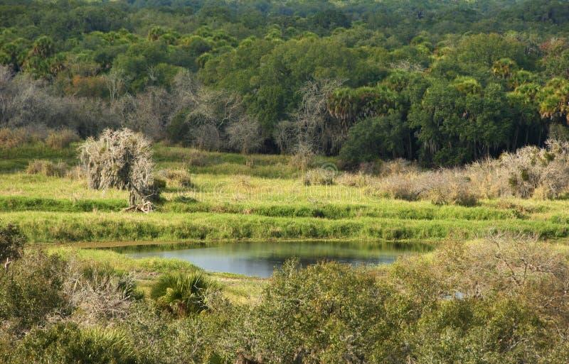 Tyst damm i den Florida skogen arkivfoton