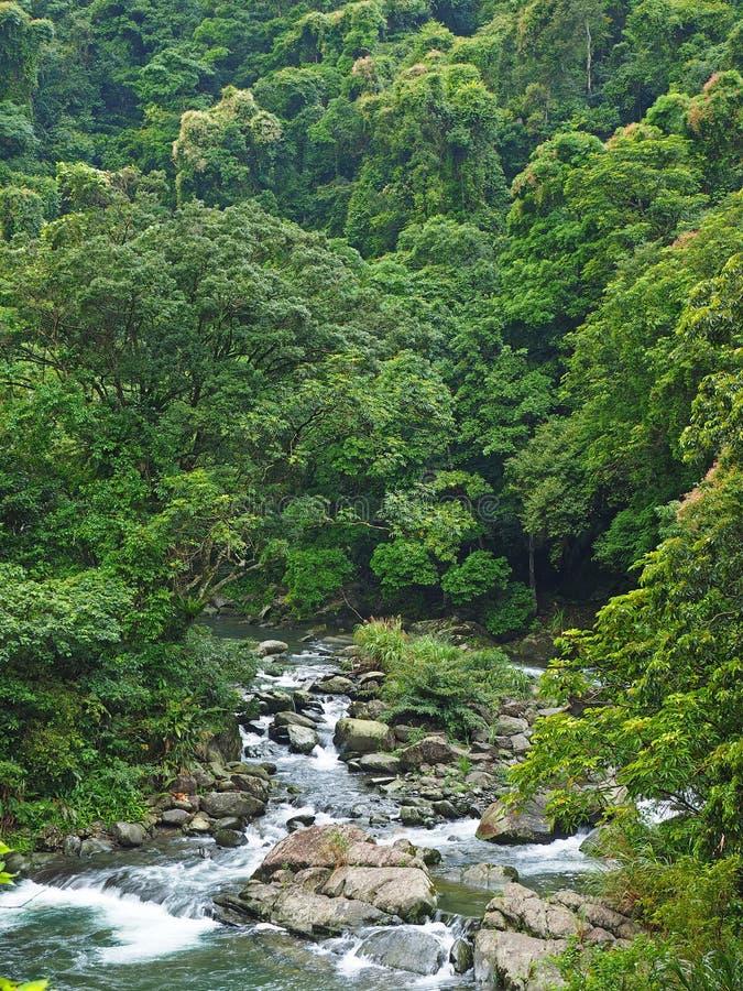 Tyst flod och grön skog arkivbild