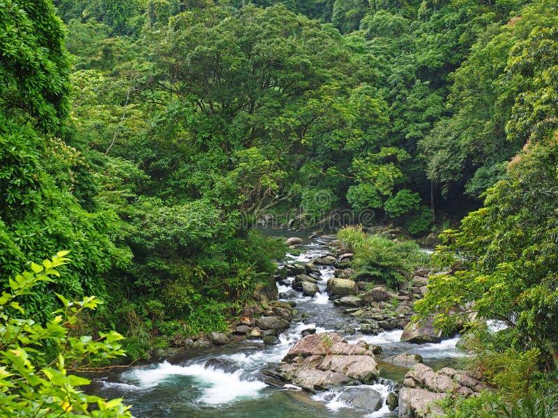 Tyst flod och grön skog arkivfoto