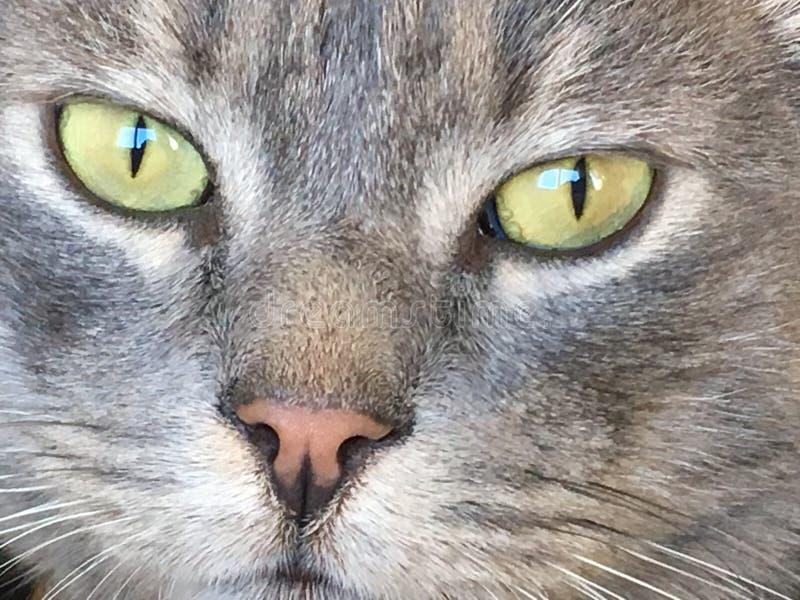 Tyst katt arkivfoto
