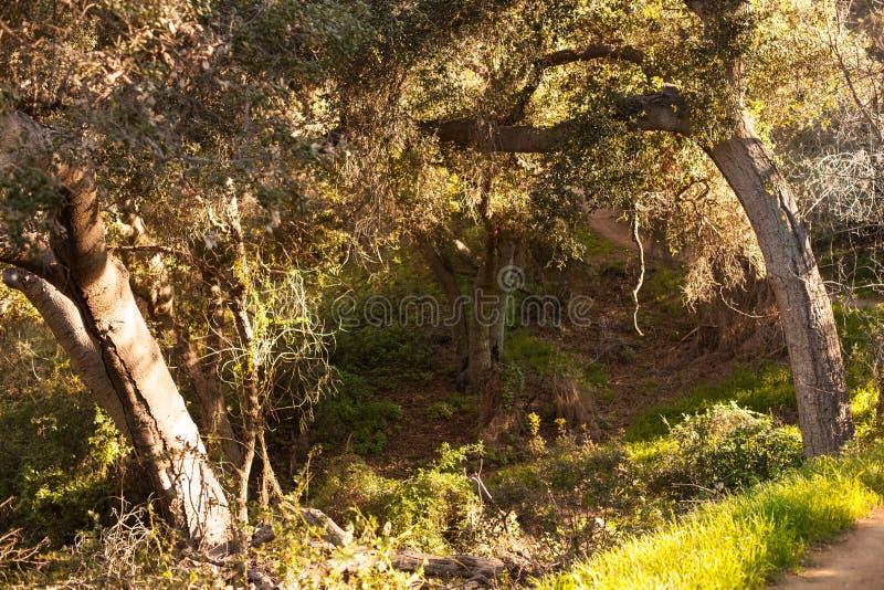 Tyst och fridsam Franklin Canyon vandring i Beverly Hills, Kalifornien Parkera som lokaliseras nära Benedict Canyon på royaltyfri fotografi