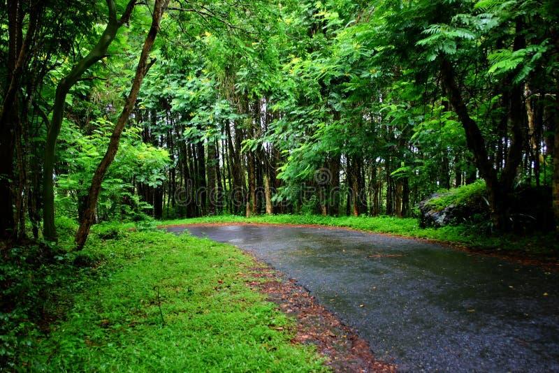 Tyst road2 fotografering för bildbyråer